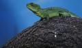 Зубастая экзотика: как теперь правильно содержать животных дома