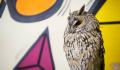 Орнитологи рассказали, как ушастая сова могла залететь в центр Москвы