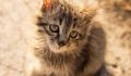 При пожаре на западе Москвы спасли четверых котят