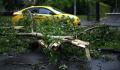 Упавшее на северо-востоке Москвы дерево повредило две машины