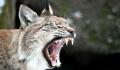 В Московском зоопарке показали, что происходит в вольерах по ночам