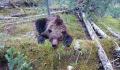 "В красноярском парке ""Ергаки"" медведь напал на туриста, возбуждено дело"