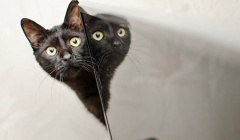В Москве возбудили уголовное дело после убийства кошки и трех котят